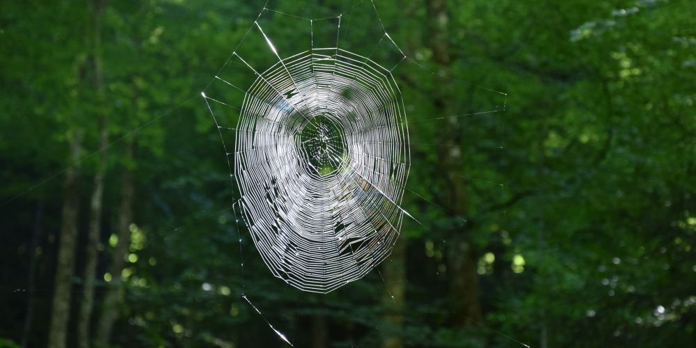 Look, a spider web!